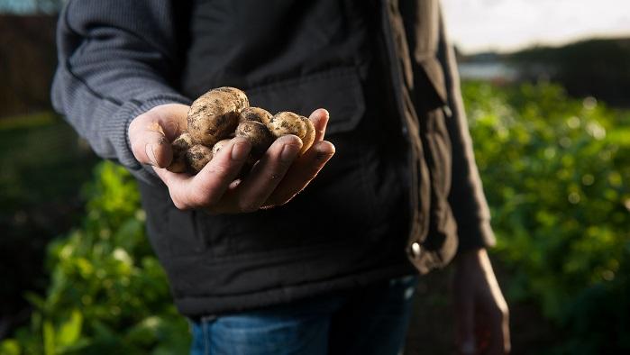 Podaljšan rok prijav na razpis Podukrep 6.1 Pomoč za zagon dejavnosti za mlade kmete