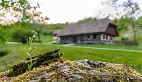Delavnice Zeliščarskega centra jugovzhodne Slovenije